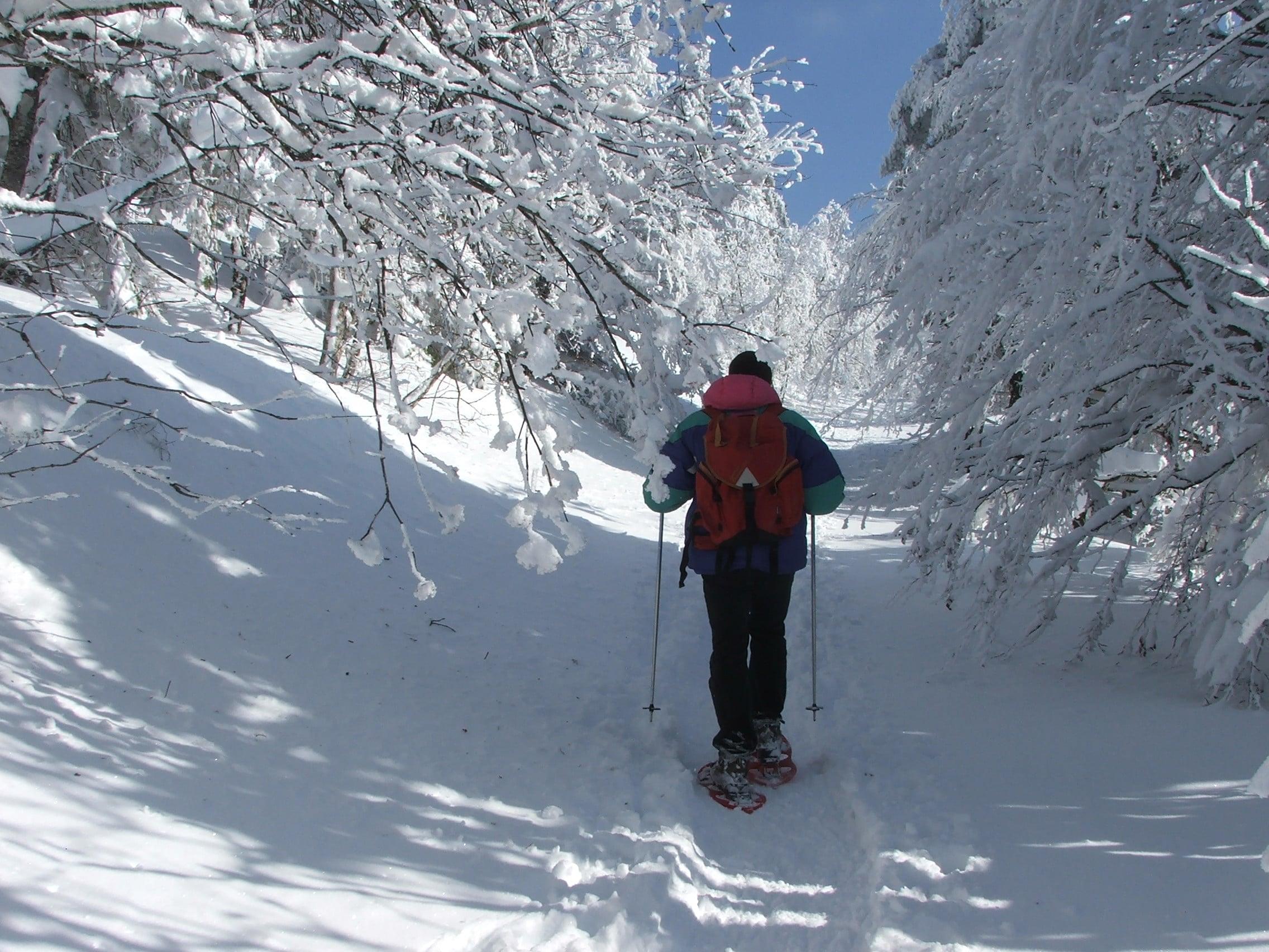 Randonnée Raquettes Mont Aigoual 117