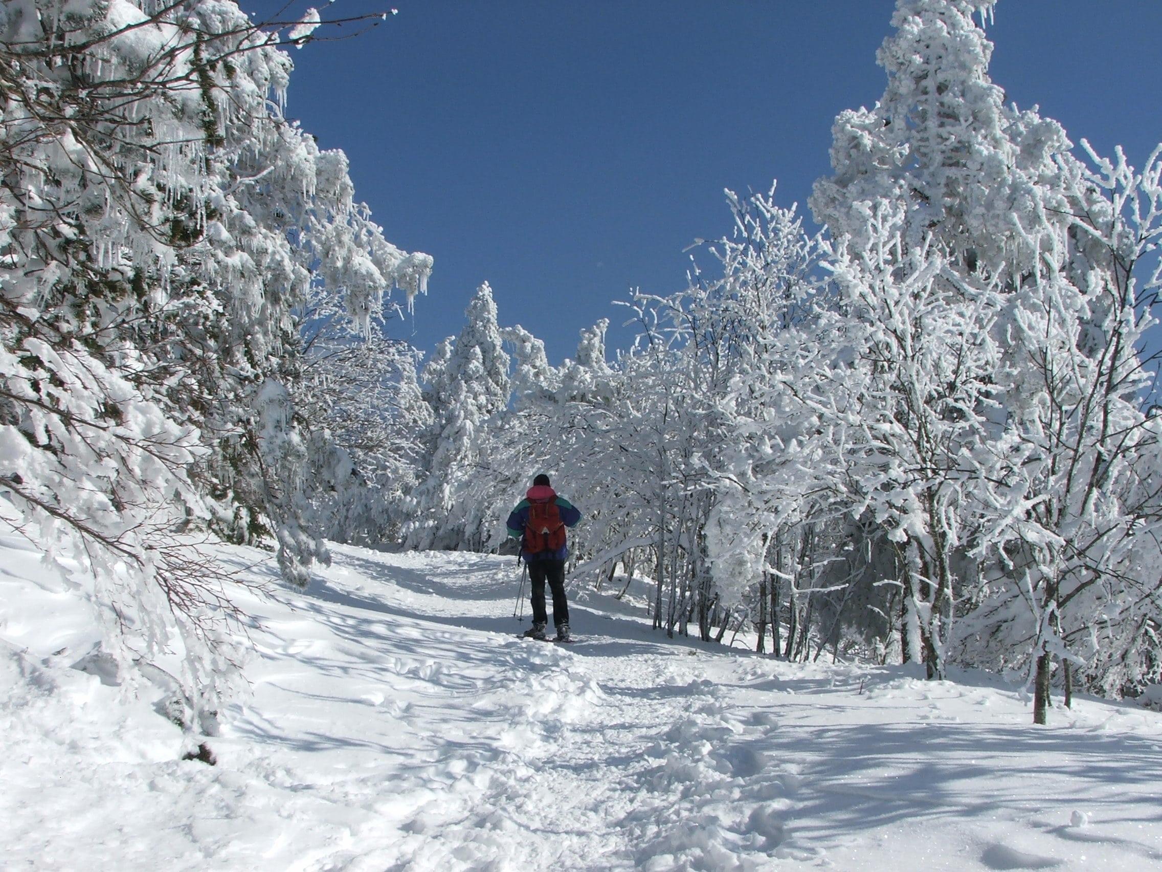 Randonnée Raquettes Mont Aigoual 116