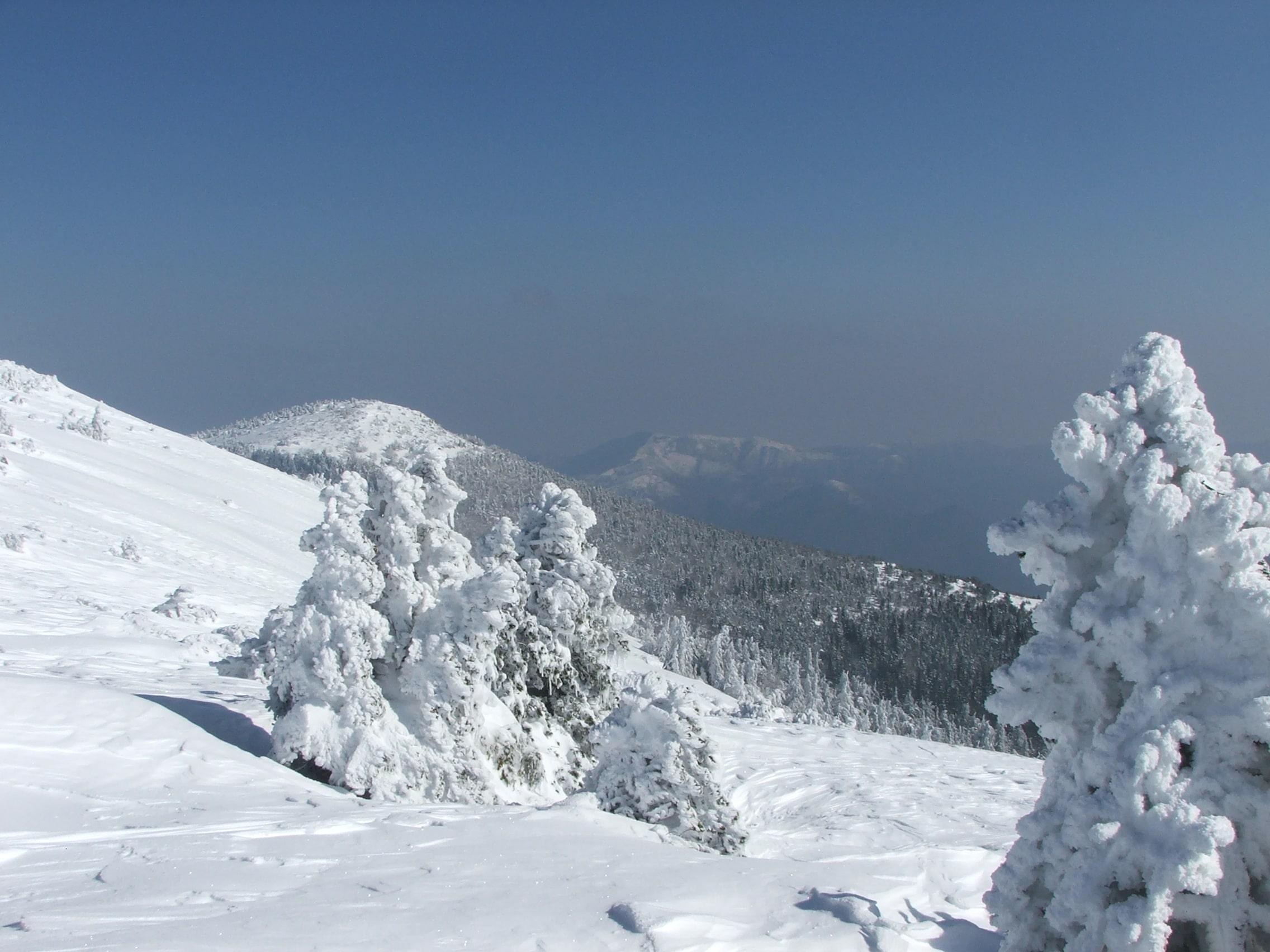 Randonnée Raquettes Mont Aigoual 113
