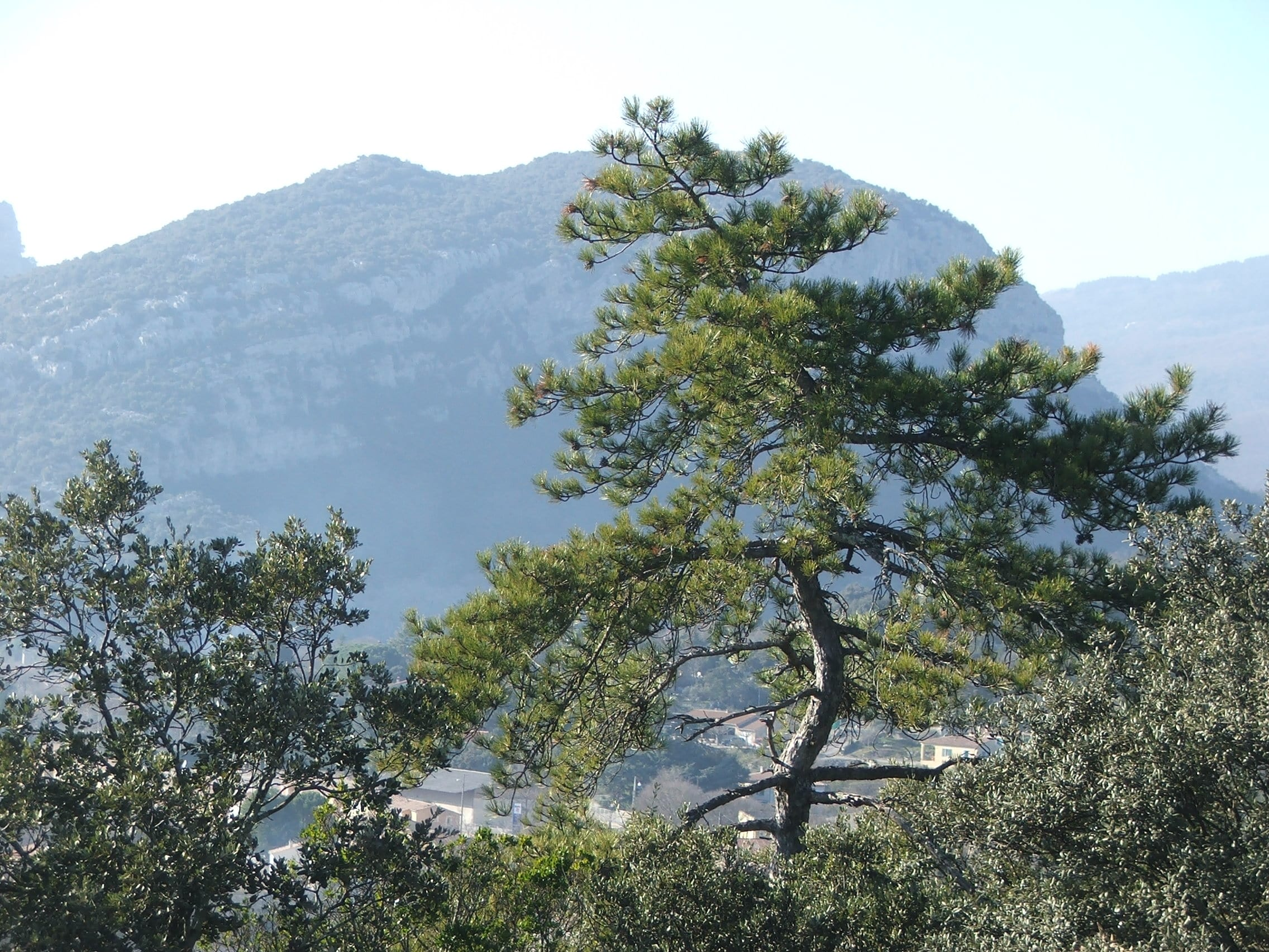Randonnée St Hippolyte du Fort 102