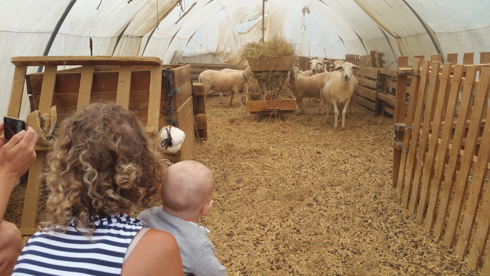 Gites Bergerie en Garrigue Mouton 54