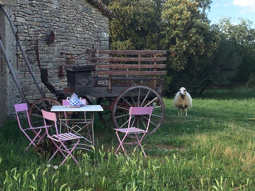 Gîtes Gard Extérieur Mouton 30