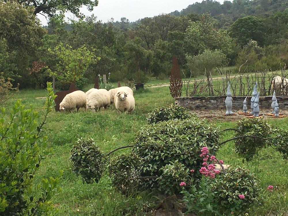 Gîtes Gard Extérieur Mouton 29