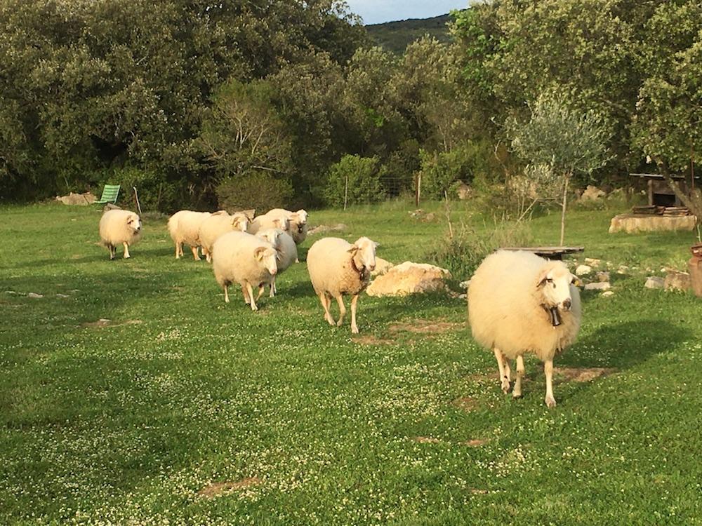 Gîtes Gard Mouton Jardin 27