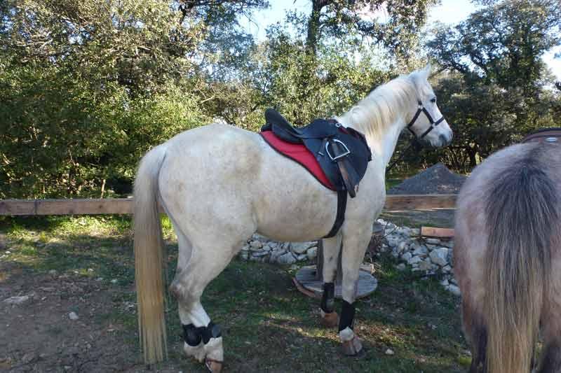 Gîtes rando chevaux gard 186